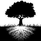 Baum wurzelt Schattenbild Stockfoto