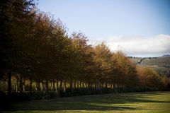 Baum zeichnete Weg auf einer Zustandbauernhoflandschaft Stockbild