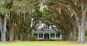 Baum zeichnete Weg zum südlichen Haus im Hintergrund Stockbilder