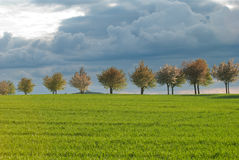 Baum-Zeile Lizenzfreies Stockbild