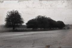 Baum-Zeile Stockfotografie