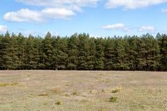 Baum-Zeile an der Wiese stockfotos
