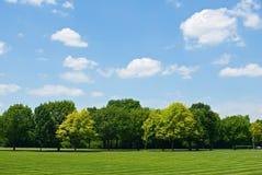Baum-Zeile mit Himmel Stockfotos