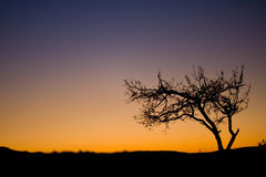 Baum zur Dämmerung-Zeit Lizenzfreie Stockbilder