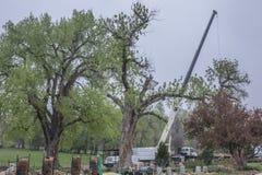 Baum-Zutat Stockbilder