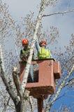 Baum-Zutat und Glied-Abbau von einem Eimer-LKW Stockfotografie