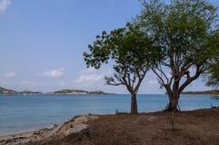 Baum zwei auf Meer Lizenzfreie Stockfotos
