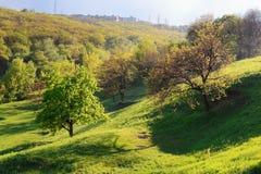 Baum zwei im Hügel Lizenzfreies Stockfoto