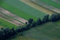 Baum zwischen Feld Lizenzfreies Stockfoto