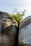 Baum zwischen Felsen Lizenzfreie Stockfotografie