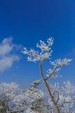 Baumabdeckung durch Schnee Lizenzfreies Stockbild
