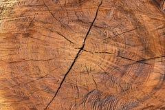 Baumabschnitt verringert als Hintergrund Stockfotos