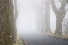 Baumallee mit Straße im Nebel - Nationalpark Elbtalaue auf der Elbe Deutschland Stockbilder