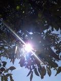 Baumanlage Lizenzfreie Stockfotografie