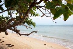 Baumast auf Tropeninselstrand lizenzfreie stockbilder
