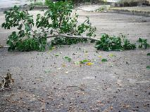 Baumast, der nach dem Sturm sich bräunt stockbilder