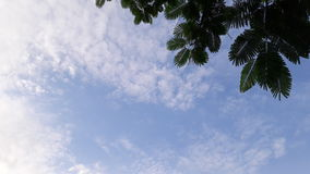 Baumast im Hintergrund des bewölkten Himmels Lizenzfreies Stockfoto