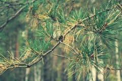 Baumast im Wald, Bäume des Waldes Lizenzfreies Stockfoto
