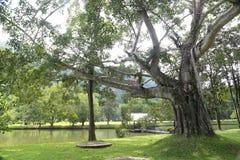 Baumast liefern Schatten, um ein ausgezeichnetes Geschöpf und den Besucher herzustellen Nationalpark Sukhothai Satchanalai Lizenzfreies Stockbild