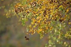 Baumast mit Blättern im Herbst lizenzfreie stockfotos