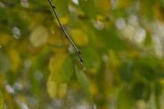 Baumast mit einem Regentropfen Stockbild