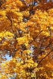 Baumast mit Herbstlaub Stockfotos