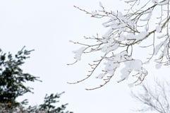 Baumast umfasst im Schnee Lizenzfreies Stockfoto