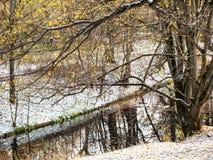 Baumaste über Waldfluß im städtischen Park lizenzfreies stockfoto