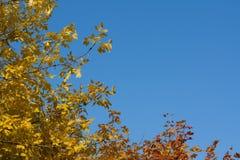 Baumaste auf blauem herbstlichem Himmel Lizenzfreies Stockfoto