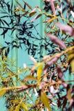 Baumaste, die Schatten auf grünem Zaun werfen Sommer sonnige Folia Lizenzfreie Stockfotografie