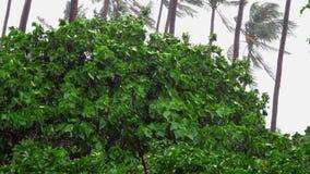 Baumaste, die unter schweren Sturm und Wind im schlechten Wetter verbiegen stock video