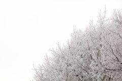 Baumaste an einem schneebedeckten Tag im Winterwald Lizenzfreie Stockbilder