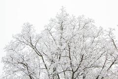 Baumaste an einem schneebedeckten Tag im Winterwald Stockbilder