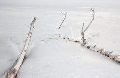 Baumaste eingefroren im Eis Lizenzfreies Stockbild