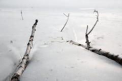 Baumaste eingefroren im Eis Stockfoto