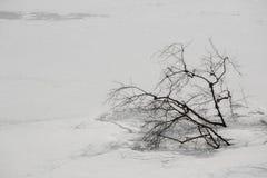 Baumaste eingefroren im Eis Stockbild
