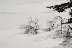Baumaste eingefroren im Eis Stockfotografie