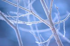 Baumaste eingefroren im Eis Gefrorener Baumast in der Winterwaldniederlassung umfasst mit Schnee Stockfoto