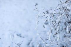 Baumaste eingefroren im Eis verzweigen Sie sich in den Winterwald, der mit Schnee bedeckt wird Lizenzfreie Stockbilder