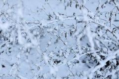 Baumaste eingefroren im Eis verzweigen Sie sich in den Winterwald, der mit Schnee bedeckt wird Stockbild