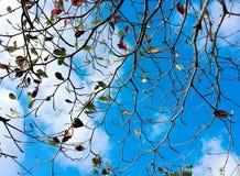 Baumaste entwirrten sich in den Mustern auf einem Hintergrund des blauen Himmels Lizenzfreies Stockfoto