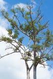 Baumaste gegen geschwollene Wolken und Hintergrund des blauen Himmels Lizenzfreie Stockbilder