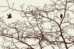 Baumaste im Frühjahr Stockbilder