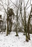Baumaste im Schnee Stockfotos