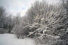 Baumaste im Schnee Lizenzfreies Stockbild