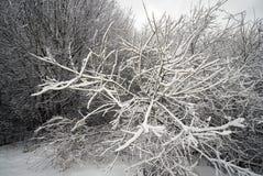 Baumaste im Schnee Lizenzfreie Stockfotografie