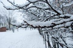 Baumaste im Schnee stockbild