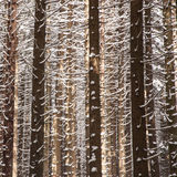 Baumaste im Winter Lizenzfreies Stockbild