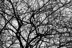 Baumaste lokalisiert auf dem weißen Hintergrund, Wald Lizenzfreies Stockbild