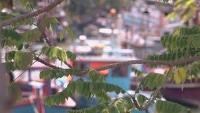 Baumaste mit Blättern gegen Boote mit bokeh Effekt stock video footage